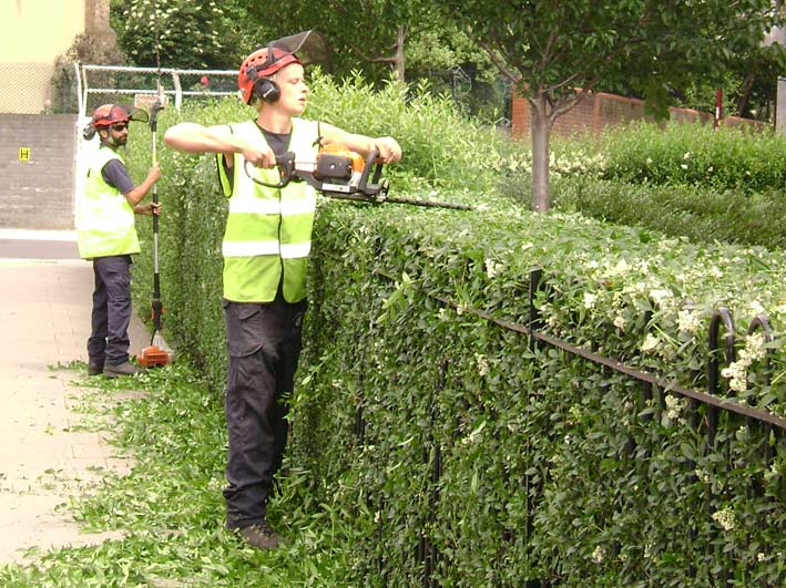 Hedge Cutting In Leicestershire