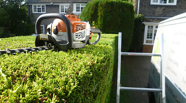 Leicester Hedge Cutting